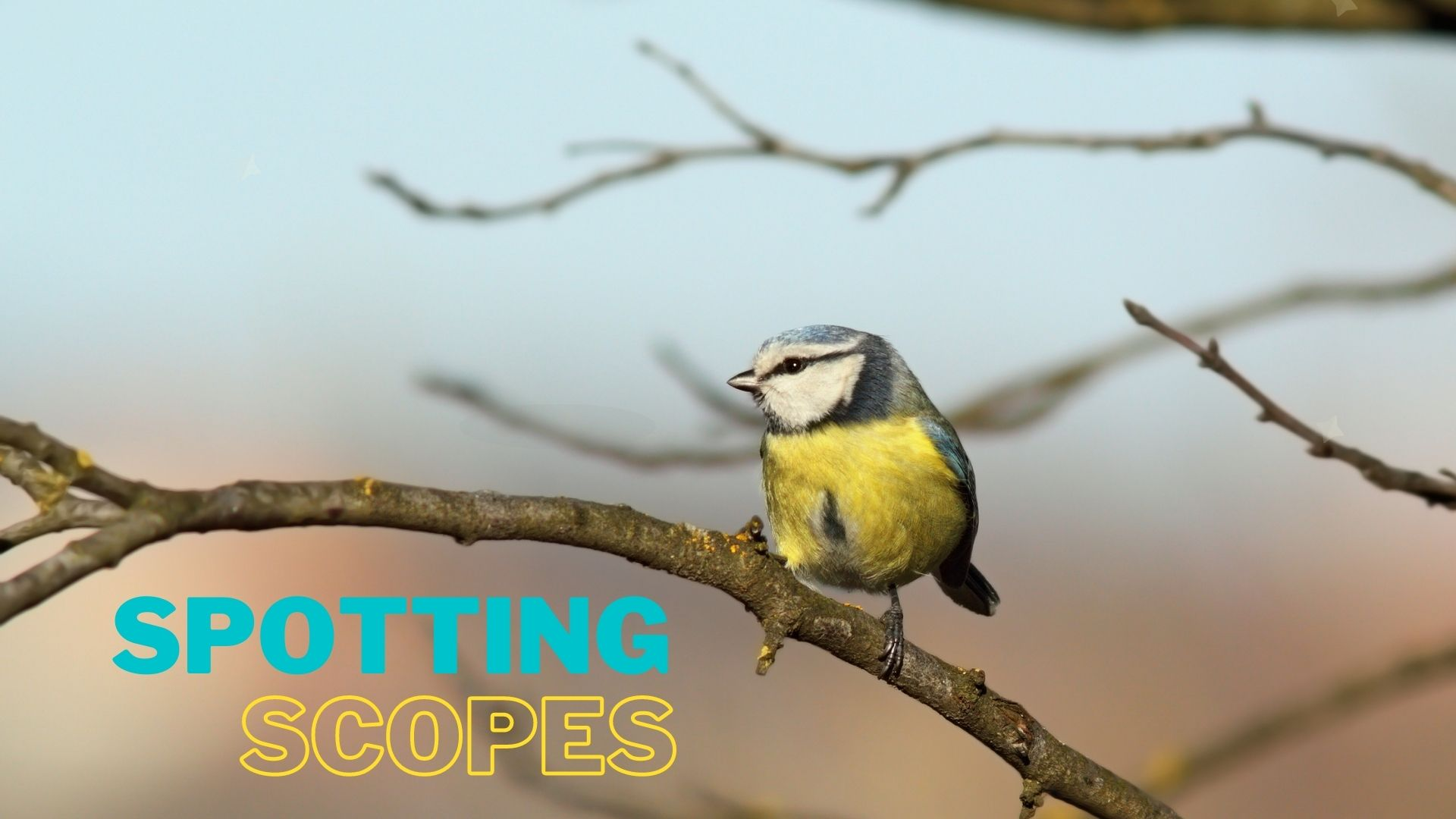 Best Spotting Scopes for bird watching and plane spotting